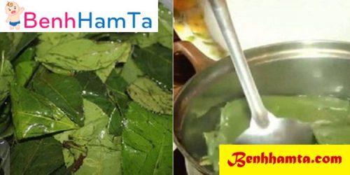 Nấu nước lá trà xanh vệ sinh vùng hăm cho bé rất tốt
